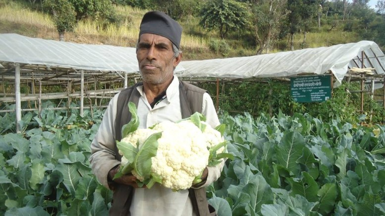 Cauli flower Rasuwa (3)