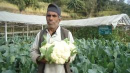Cauli flower Rasuwa (3)